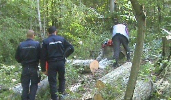 Hoți de lemne, surprinși în flagrant de jandarmii sălăjeni