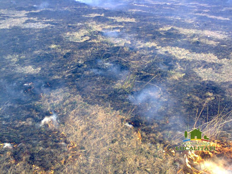 Incendii de vegetație uscată produse ieri în Șimleu Silvaniei, Păușa și Horoatu Crasnei