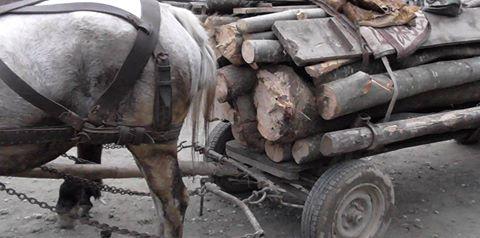 Material lemnos confiscat de polițiștii sălăjeni