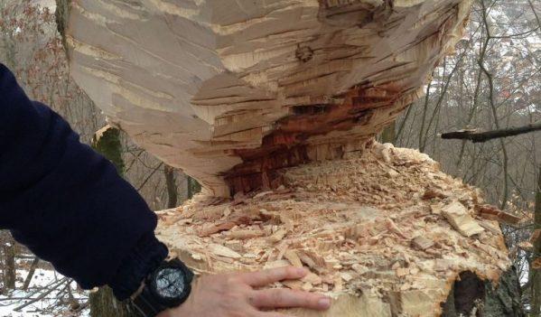 Infracţiune silvică constatată de jandarmi în Jibou