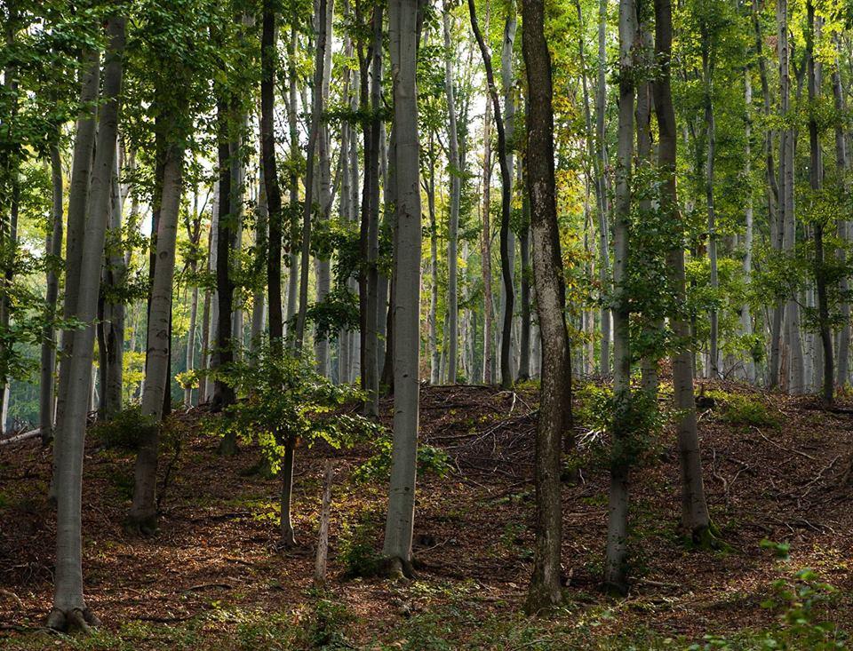 """Plantare de copaci în Zalău, cu simbolistica """"Eroii căzuți în Primul Război Mondial"""""""